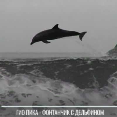 دانلود آهنگ фонтанчик с дельфином Гио Пика